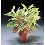 フェイクグリーン クロトンブッシュ(L) (人工観葉植物 光触媒対応 インテリア)