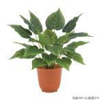 ファインフィロブッシュ 人工観葉植物 フェイクグリーン 造花  ポット 鉢 は別売りです  LEB8306