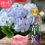 母の日 2021 花 ギフト 生花 アジサイ 万華鏡 ブルー 5号 島根県産 紫陽花 鉢植え プレゼント 贈り物 ギフト お祝い