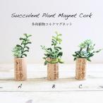 多肉植物コルクマグネットミニ多肉植物寄せ植え風マグネットつきコルクアレンジ