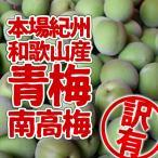 南高梅 青梅 生梅  和歌山産  訳あり 5kg(3L以上〜Lサイズ混合)
