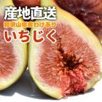 訳あり ご家庭用 フルーツ王国 和歌山県産 産地直送 いちじく 800g