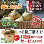 新玉ねぎ たまねぎ 和歌山県産 約2.5kg 2セット買えば1箱分おまけ 訳あり 送料無料 玉葱 タマネギ