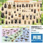 送料無料 コイズミ製学習デスクマット YDS-850KK 小学館の図鑑NEO恐竜/世界のカブトムシ・クワガタムシ 両面カラー印刷