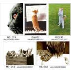 ポストカード キャット 写真 猫Friends Forever[HEART Art Collection]ハートアートコレクション・絵葉書・ネコポストカード・ ドイツ 直輸入