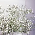 カスミソウ 花束 追加用オプション かすみ草