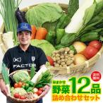 産地直送野菜セット!「九州産 /14品 野菜セット」詰め合わせ【クール便】