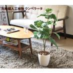 観葉植物 光触媒 造花 ウンベラータ グリーン