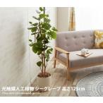 観葉植物 シーグレープ sea grape イミテーショングリーン 室内