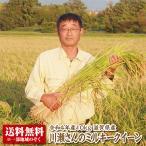【新米】【送料無料】【令和2年産】滋賀県産川瀬さんのミルキークイーン10kg 【特別栽培米】【生産者限定米】