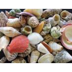 1kgミックス 約3〜9cm/約1kg 貝 貝殻 シェル 巻貝 フォト 絵画 ハンドメイド 海 ブライダル ウェルカムボード