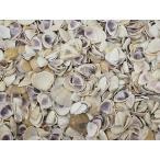 Yahoo! Yahoo!ショッピング(ヤフー ショッピング)アヒルノシタ 約0.7〜2cm/100g 貝 貝殻 シェル 二枚貝 ブライダル ウェルカムボード ハンドメイド フレーム 海 ストラップ