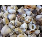 ビーチシェル 約1〜3cm/500g 貝殻 貝 シェル