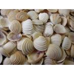 Yahoo! Yahoo!ショッピング(ヤフー ショッピング)ケーキシェル 約2.0〜2.5cm/100g 貝 貝殻 シェル 二枚貝 ブライダル ウェルカムボード ハンドメイド フレーム 海 ストラップ