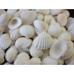 Yahoo!貝殻の問屋さん ホームテリアハイガイ 約2〜3cm/500g 貝 貝殻 シェル 二枚貝 ブライダル ウェルカムボード ハンドメイド フレーム 海 ストラップ