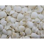 Yahoo!貝殻の問屋さん ホームテリアクラムローズ 約1.5〜2.0cm/500g 貝 貝殻 シェル 二枚貝 ブライダル ウェルカムボード ハンドメイド フレーム 海 ストラップ