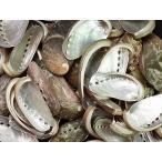 ミミガイ自然 約4.0〜9.0cm/500g 貝殻 貝 シェル