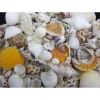 海の贈り物ミックス 約1〜5cm/約500g 貝 貝殻 シェル 巻貝 フォト 絵画 ハンドメイド 海 ブライダル ウェルカムボード