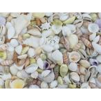 ミックスシェル 約1.5〜4.5cm/100g 貝 貝殻 シェル ブライダル ウェルカムボード ハンドメイド フォトフレーム アクセサリー