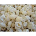 Yahoo!貝殻の問屋さん ホームテリアイボヨフバイ 約1.5〜2.5cm/500g 貝 貝殻 シェル 小さな貝 キャンドル ブライダル ウェルカムボード ハンドメイド フレーム