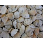 Yahoo! Yahoo!ショッピング(ヤフー ショッピング)サンカクアサリ 約1.5〜2.5cm/100g 貝 貝殻 シェル 二枚貝 ブライダル ウェルカムボード ハンドメイド フレーム 海 ストラップ