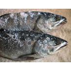 北海道 えりも産 熟成 新巻鮭 3.0kg前後(1本物)