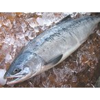 Salmon - 【原産地からの直送】 鮮度抜群! 鮮秋鮭(メス) 2.5Kg前後(1本物)