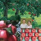 【お歳暮】【送料無料】たかはし果樹園 福島市産りんご 完熟サンふじ 3kg 9〜12玉