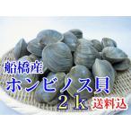 活ホンビノス貝 濃い出汁が出るのが自慢 千葉県産ホンビノス貝 2Kg  B.B.Q用に新たな具材