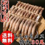柳叶鱼 - (送料無料) 北海道産 子持ち ししゃも メス 30尾 特大サイズ 柳葉魚 クール便