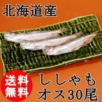 北海道産 ししゃも オス 30尾 送料無料 特大サイズ 柳葉魚 ギフト 御歳暮  国産 お取り寄せ クール便