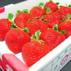 福岡県産 いちご 特選 あまおう 12粒入り  イチゴ お歳暮 ギフト  出荷予定:12月上旬〜 #元気いただきますプロジェクト(野菜・果物)