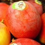 メキシコ産アップルマンゴー 2個入り  高級品アップルマンゴー 父の日 ギフト