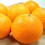 愛媛県産 紅まどんな 6個入り 中トロ柑橘と呼ばれる紅まどんな! お歳暮 ギフト 発送:11月下旬〜