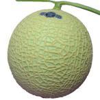 静岡県産 クラウン マスクメロン 大玉 化粧箱入り 国産メロンの最高級品  ガラス温室で栽培されたフルーツの王様 お歳暮 ギフト