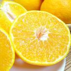 最も人気のある柑橘デコポン!ホワイトデーのギフトにおすすめ!