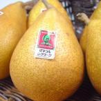 青森県産 西洋梨 ゼネラルレクラーク 大玉8個 (化粧箱入り)  本州最北県で育てられた西洋梨の名品  出荷予定:10月下旬�