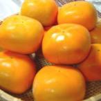 柿子 - 和歌山県産  平タネ柿 12個入り   *北海道、沖縄への発送には送料別途540円が加算されます