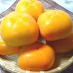 柿子 - 和歌山県産  平タネ柿 8個入り   *北海道、沖縄への発送には送料別途540円が加算されます