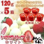 いちごトリュフ ホワイト 120g ×5箱 フリーズドライ苺をホワイトチョコレートでコーティングしたスイーツ  苺トリュフ  ホワイトデー  ギフト