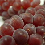 山梨県産 温室ぶどう キングデラ  3房  大阪生まれの葡萄 20度前後の糖度を持つ種無しブドウの名品! 発送:4月下旬〜