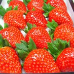奈良県産いちご 古都華 大粒12入り  「あすかルビー」を超えた奈良県生まれのいちごの優良品種   出荷予定期間:1月上旬〜2月上旬