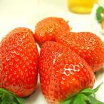 奈良県産いちご 古都華 15粒入り  「あすかルビー」を超えた奈良県生まれのいちごの優良品種  出荷予定期間:1月中旬〜2月上旬