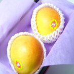 オーストラリア産 ピーチマンゴー 大玉2個 化粧箱入り  真冬に味わえる輸入マンゴーの最高級品マンゴー! お歳暮 発送:12月上旬〜