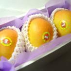 オーストラリア産ピーチマンゴー 大玉3個 化粧箱入り  真冬に味わえる輸入マンゴーの最高級品マンゴー!  発送:12月上旬〜