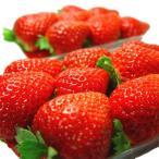 徳島県産 いちご さちのか 2パック 甘くて濃厚な味が大人気の苺・さちのか イチゴ ギフト お年賀 発送:12月上旬〜
