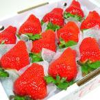 徳島県佐那河内村産 さくらももいちご 12粒入り ももいちごの里で育った苺の新品種 イチゴ  発送:1月下旬〜2月下旬