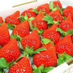 徳島県佐那河内村産 さくらももいちご 20粒入り ももいちご の里で育った苺の新品種 イチゴ  発送:2月中旬〜3月上旬