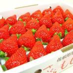 徳島県佐那河内村産 さくらももいちご 24粒入り ももいちごの里で育った苺の新品 イチゴ  発送:1月上旬〜下旬