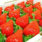 徳島県佐那河内村産 さくらももいちご 16粒入り  ももいちごの里で育った苺の新品種!  発送:12月中旬〜下旬